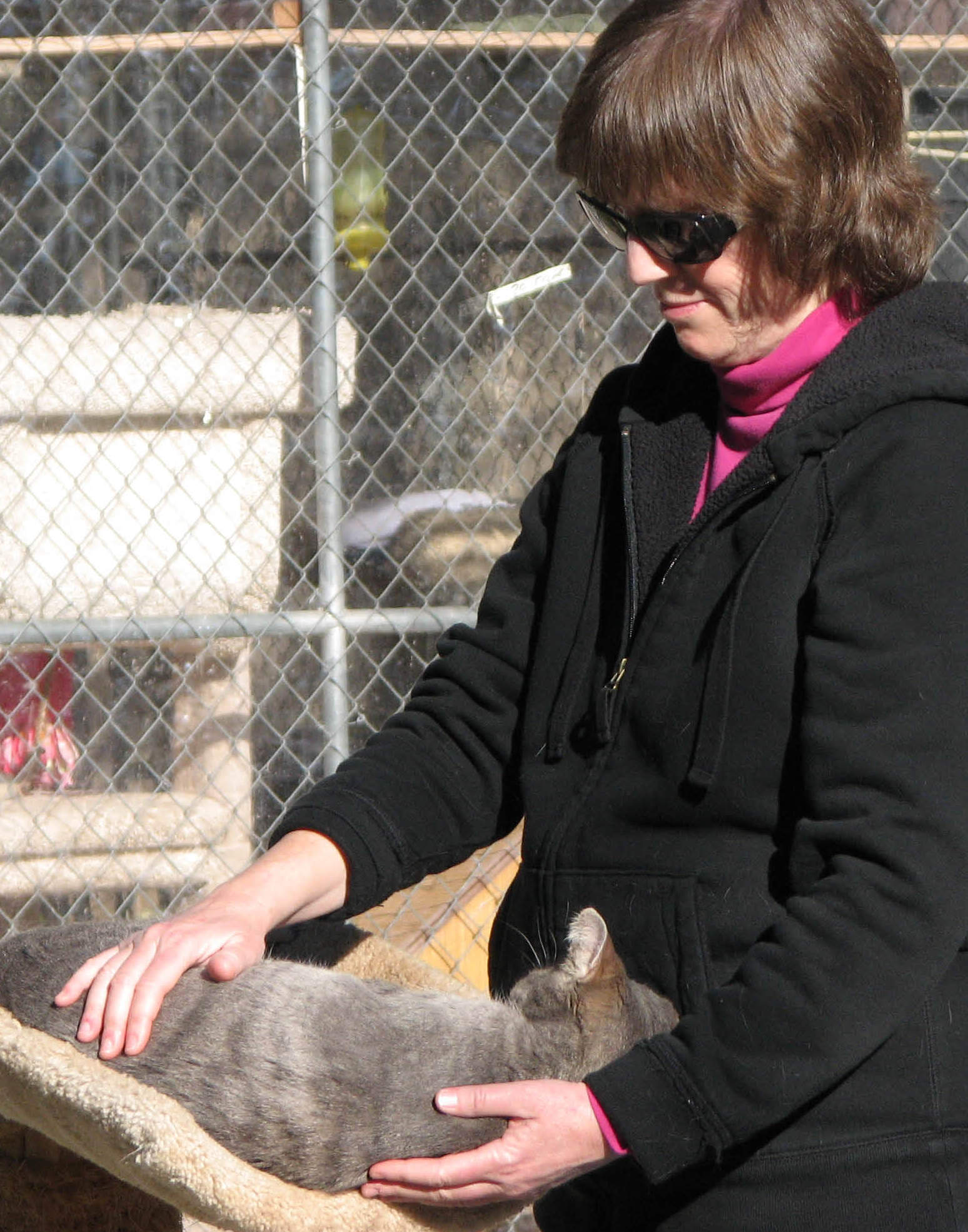 Animal Reiki: Jan Fiore offers Reiki to cat at sanctuary